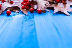 Autumn background leaves rowan fruit blue boards Royalty Free Stock Photos