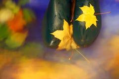 Autumn background. Royalty Free Stock Photo