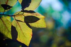 Autumn background. Autumn leaves and shallow dof Stock Photo