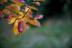 Autumn background with colorful leaves Stock Images