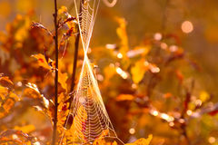 Autumn Background With Leaves And-Spinneweb Royalty-vrije Stock Foto's