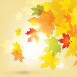 Autumn background with leaves and sun Royalty Free Stock Photo
