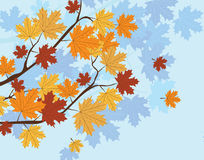 Autumn background with leaves on tree. Orange Autumn Maple Leaves on tree. Vector Stock Photo