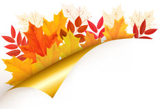 Autumn background with leaves. Stock Photography