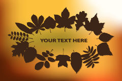 Autumn background with leaves Royalty Free Stock Photography