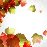 Autumn Background. Autumn Background With Leaves. Vector Illustration. Eps 10 Royalty Free Stock Photos
