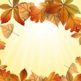 Autumn Background With Leaves. Stock Photo