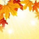 Autumn Background. Autumn Background With Leaves. Vector Illustration. Eps 10 vector illustration