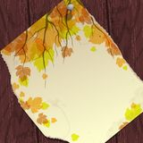 Autumn Background With Leaves. Stock Image