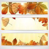 Autumn Background With Leaves. Vector Illustration. Eps 10 vector illustration