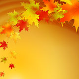 Autumn background with leaves. Vector nature. Background. EPS 10 Stock Image