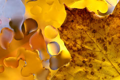 Autumn background with leaves and  water drops Stock Image