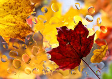Autumn background with leaves and  water drops Stock Photos