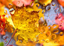 Autumn background with leaves and  water drops Stock Images