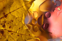 Autumn background with leaves and  water drops Stock Photo