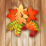 Autumn background with leaves on a wood texture. Autumn vector background with leaves, Rowan berries on a wood texture Stock Photography