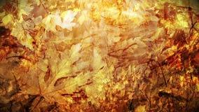 Autumn Background Loop stock video footage