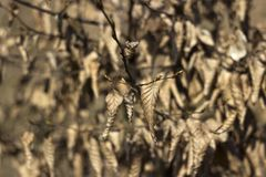 Autumn background, a lot of dry leaves hanging on the tree stock photo