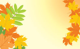 Autumn background with maple and ash leaves Stock Images
