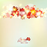 Autumn background with maple gold leaves. Autumn pattern with colorful translucent leaves Stock Photo