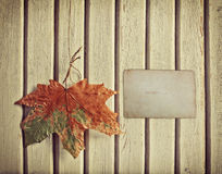 Autumn background with maple leaf Stock Images