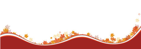 Autumn background, maple leafs Royalty Free Stock Images