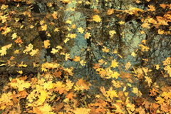 Autumn background with maple leaves. Close-up Stock Photo