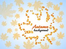 Autumn background with maple leaves. Autumn background with orange maple leaves on blue sky background Royalty Free Stock Photography