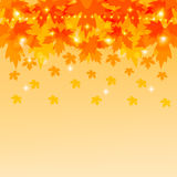 Autumn background with maple leaves. Royalty Free Stock Photo