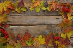 Autumn background, Maple leaves with chestnuts on a wooden table, Top view Stock Photo