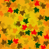 Autumn background of maple leaves. Colorful vector image Royalty Free Stock Photography