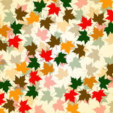Autumn background of maple leaves. Colorful vector image. Eps 10 Stock Photos