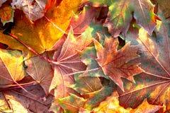 The autumn background Royalty Free Stock Photo