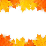 Autumn background with maple leaves. Design template Stock Photos