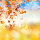 Autumn background with maple leaves. EPS 10. Beautiful autumn background with maple leaves. And also includes EPS 10 vector Royalty Free Stock Photo