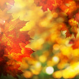Autumn Background with Maple Leaves. Fall Royalty Free Stock Photo