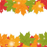 Autumn background with maple leaves Stock Image
