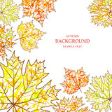 Autumn background, maple leaves and paint splashes, drops, blots. For design Royalty Free Stock Photography
