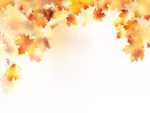 Autumn background with maple leaves. plus EPS10. Beautiful autumn background with maple leaves. plus EPS10 vector file Royalty Free Stock Image