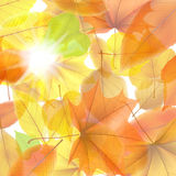 Autumn background with maple leaves. plus EPS10. Vector file stock illustration