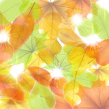 Autumn background with maple leaves. plus EPS10 Royalty Free Stock Photography