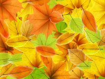 Autumn background with maple leaves. plus EPS10. Vector file Stock Photos