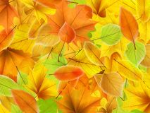 Autumn background with maple leaves. plus EPS10. Vector file royalty free illustration