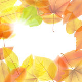 Autumn background with maple leaves. plus EPS10. Vector file Royalty Free Stock Photo