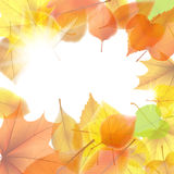 Autumn background with maple leaves. plus EPS10. Vector file Royalty Free Stock Photography
