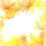 Autumn background with maple leaves. plus EPS10. Vector file Stock Photography