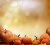 Autumn background with maple leaves and pumpkins.Harvest or Than Royalty Free Stock Images
