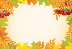 Autumn background with maple leaves and rowanberry Stock Photo