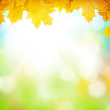 Autumn background with maple leaves. And sunny bokeh Royalty Free Stock Photo