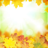 Autumn background with maple leaves. And sunny bokeh Stock Photos